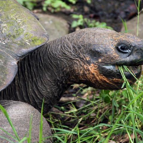 Tortoise Close Encounter